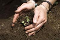 苗を植える女性の手元