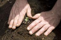 苗を植える男性の手元
