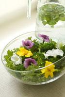 サラダとミント水 21090001294| 写真素材・ストックフォト・画像・イラスト素材|アマナイメージズ