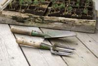 ヒマラヤ杉の苗箱とスコップとガーデンフォーク