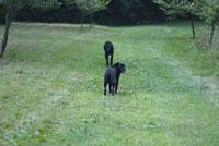 芝生にいる犬2匹