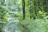 森の中の2匹の犬