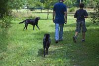 森の中を歩く大人と子供と2匹の犬