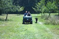 カートに乗る大人と子供と走る犬