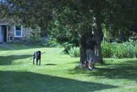 芝生の犬と子供