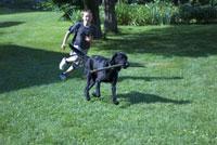 芝生で遊ぶ犬と子供