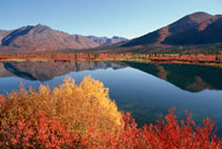 Autumn colour by a lake at the side of the Denali Highway. A