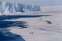 Emperor penguins on sea ice near iceberg. Weddell Sea,Anta