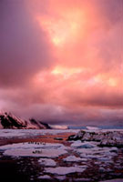 Sunset over Adelie Penguins by Bellingshausen Is & Cook Is.