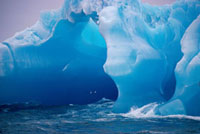 Pintado Petrels fly in front of buttresses on an iceberg of