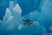 Chinstrap penguins rest on a sculpted blue iceberg of ancien