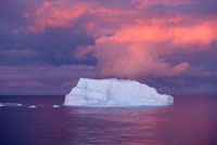 Iceberg at sunset with a pink cloudy sky behind. Antarctica.
