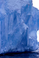 Curtains of icicles hang from a rich blue iceberg in the Ant