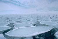Pancake ice. Antarctica