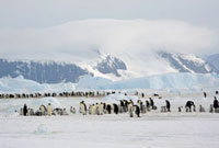 Snow Hill Emperor Penguin Colony with a backdrop of mountain