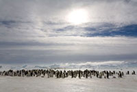Sun halo over an emperor penguin colony at Snow Hill Island