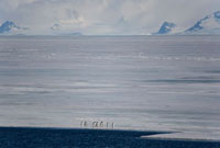 Adelie Penguins on the edge of the fast ice in Antarctic Sou