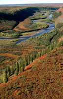 The Kugalik River valley in autumn colour. N.W.T. Canada