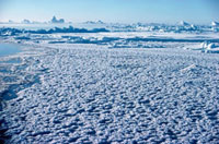Newly formed sea ice with ice flowers,in winter in Melvill