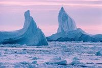 Two large icebergs amongst ice floes in the summer off the c
