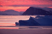 Icebergs with new sea ice forming around them at sunset in t