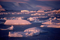 Icebergs floating off Meteorite island in low autumn sunshin