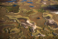 An aerial view of summer tundra near Nadym in the Yamal. Wes