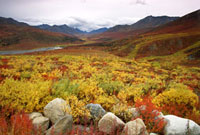The Tombestone Valley in autumn colour. Northern Yukon,Can