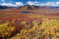 Autumn colour viewed from the Dempster Highway. Yukon,Cana