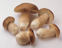 Five ceps