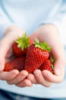 childs hands holding fresh strawberry 22199024195| 写真素材・ストックフォト・画像・イラスト素材|アマナイメージズ