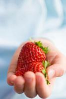 One childs hand holding fresh strawberry 22199024196| 写真素材・ストックフォト・画像・イラスト素材|アマナイメージズ