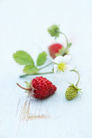 Wild strawberries with flower