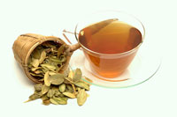Boxwood tea and box leaves