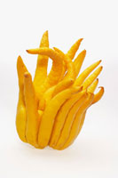 Buddhas Hand (Citrus medica)