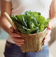 Basket of fresh pak choi leaves