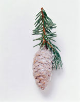 Christmas decoration: sugar-coated cone