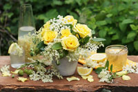 Vase of yellow roses and elderflowers