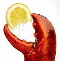 A wedge of lemon in a lobster claw 22199040668| 写真素材・ストックフォト・画像・イラスト素材|アマナイメージズ