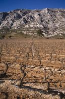 Vineyard against mountain chain