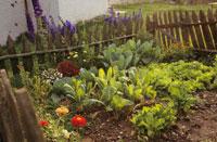 Flower and Vegetable Garden