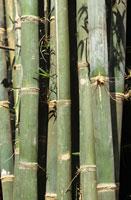 Bamboo 22199042047| 写真素材・ストックフォト・画像・イラスト素材|アマナイメージズ
