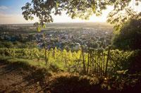 Bensheim wine-growing area