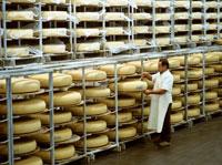 Dairyman taking sample of cheese