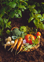 Willow basket of fresh vegetables