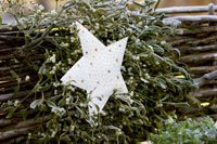 A metal star among mistletoe
