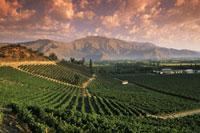 Errazuriz Winery in Panquehue in Aconcagua Valley