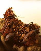 Stages of Chocolate Cocoa Beans, Cocoa Powder and Chocolate