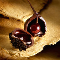 Halved chocolate,filled with cherry and cherry liqueur