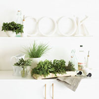 Fresh herbs on white kitchen cupboards